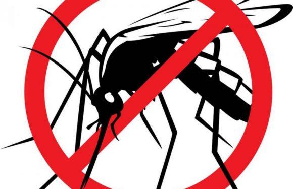 Obavijest o dezinsekciji komaraca – novo
