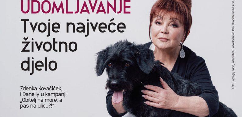 """Psi iz kampanje """"Obitelj na more, a pas na ulicu?!"""": Čupavi, Vili, Danelly"""